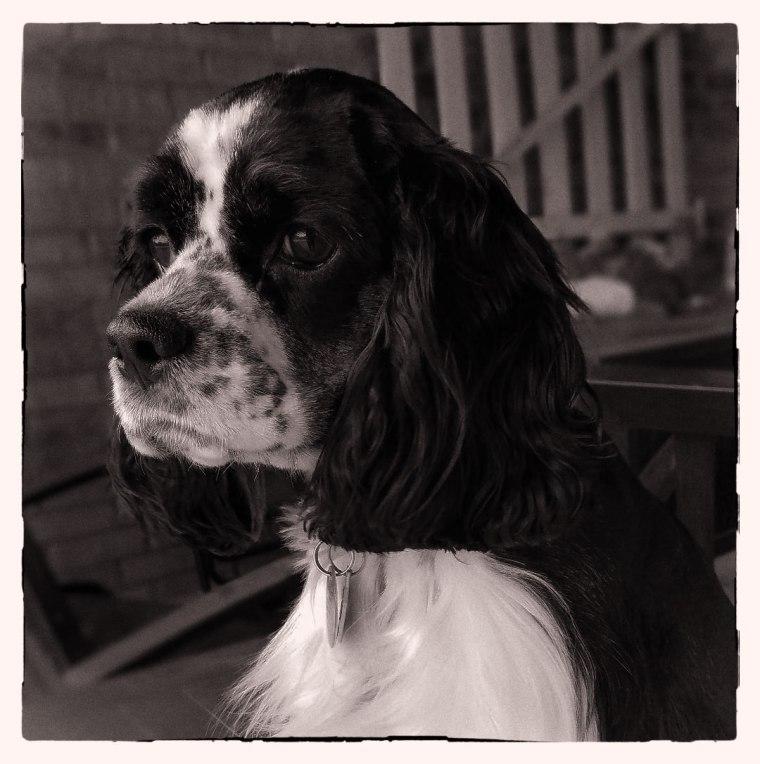 Lucy4-06-18BNik