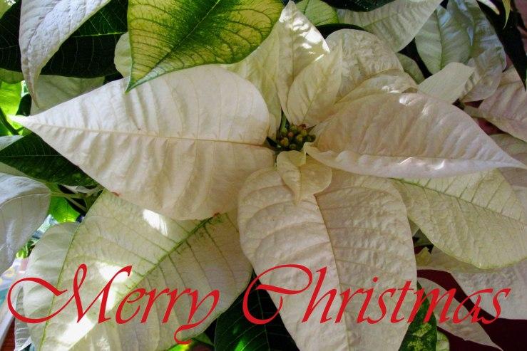 ChristmasWeb2015-02